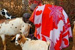 Masai woman milking a goat with a baby on the back. Selenkay Conservancy, Kenya.