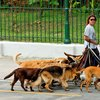 "Professional ""dog walker"" in Buenos Aires"