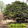Tokyo - Shinjuku-goen Garden (54).JPG