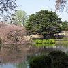 Tokyo - Shinjuku-goen Garden (53).JPG