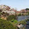 Tokyo - Shinjuku-goen Garden (56).JPG