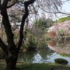 Tokyo - Shinjuku-goen Garden (49).JPG