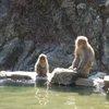 017a   Snow Monkey Park (38)