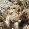017a   Snow Monkey Park (10)