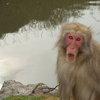 011   Kyoto (329)    Arashiyama Area   Monkey Park