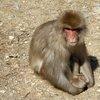 017a   Snow Monkey Park (11)