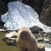 017a   Snow Monkey Park (81)
