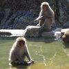 017a   Snow Monkey Park (46)