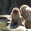 017a   Snow Monkey Park (67)