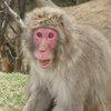 011   Kyoto (324)    Arashiyama Area   Monkey Park