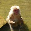 017a   Snow Monkey Park (23)