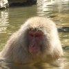 017a   Snow Monkey Park (64)