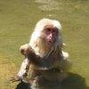 017a   Snow Monkey Park (28)