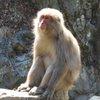017a   Snow Monkey Park (39)