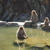 017a   Snow Monkey Park (44)