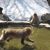 017a   Snow Monkey Park (36)