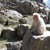 017a   Snow Monkey Park (20)