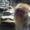 017a   Snow Monkey Park (51)
