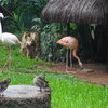 Parque dаs Aves
