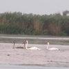 езерото на лебедите