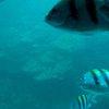 Bali & Indian ocean 34