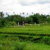 Bali & Indian ocean 48.JPG