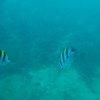 Bali & Indian ocean 32