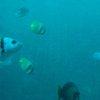 Bali & Indian ocean 35