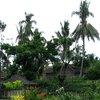 Borobudur 41.jpg