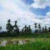 Borobudur 42.jpg