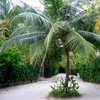 Furanafushi Island 35