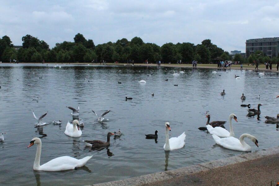 езеро в Хайд парк